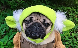 Doug the Pug : le chien star adepte du cosplay
