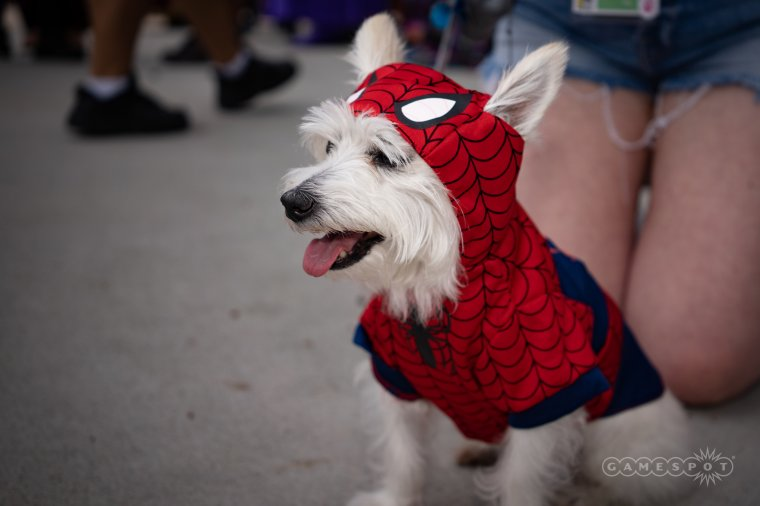 Les plus beaux cosplays du Comic-Con de San Diego 2018 - Spider-Dog